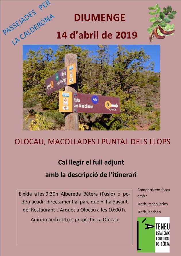 abril 2019 - Olocau Macollades 1